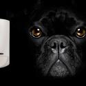 Huisdiervriendelijke detectoren van Inim bij SmartSD